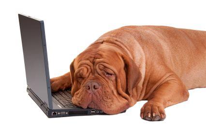 Sleeping_and_blogging