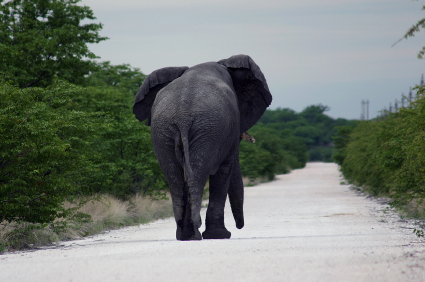 roadblock_elephant