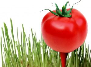 Tomato_Tee_off