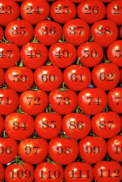 Army-of-tomatoes2