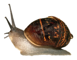 slow_as_a_snail_in_molasses_in_january